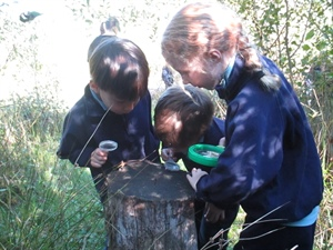 year 1 & 2 Forest School